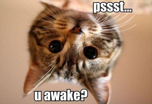 Funny Cat Meme Pictures : Top best cute funny cats memes on internet entertainmentmesh