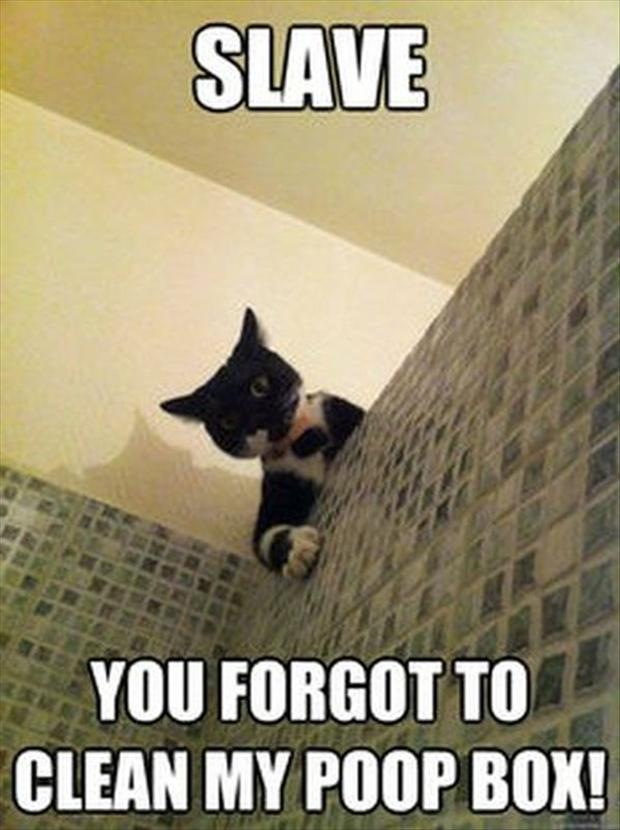 Funniest Cat Meme