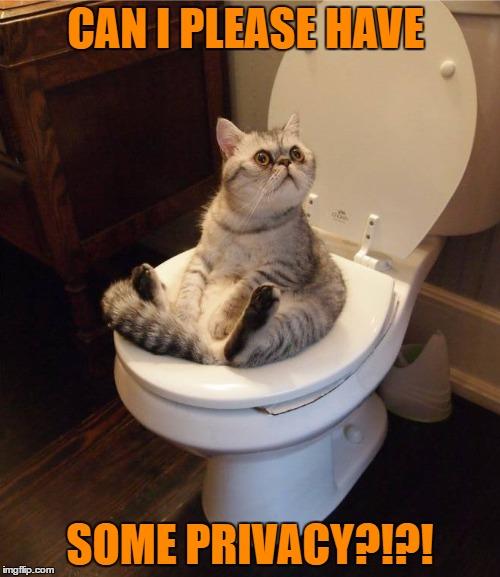 Hilarious Cat Meme