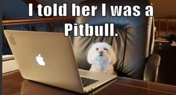 Funny Pit Bull Meme