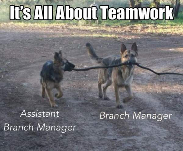 Funny German Shepherd Meme Picture Branch Managers