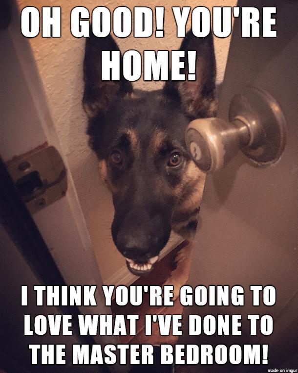 Funny German Shepherd Memes Pictures Master Bedroom