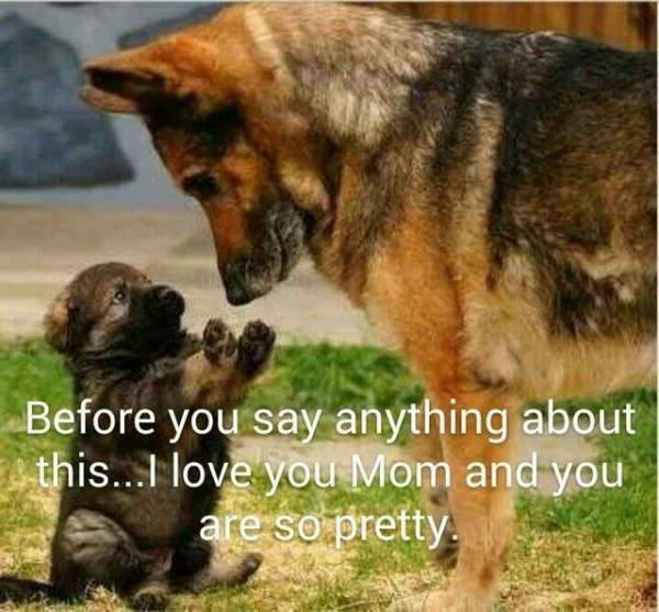Funny German Shepherd Meme Picture Mom and Puppie