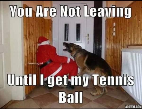 Funny German Shepherd Meme Santa Claus