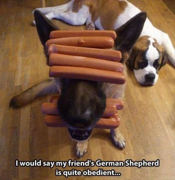 Funny German Shepherd Memes Sausages