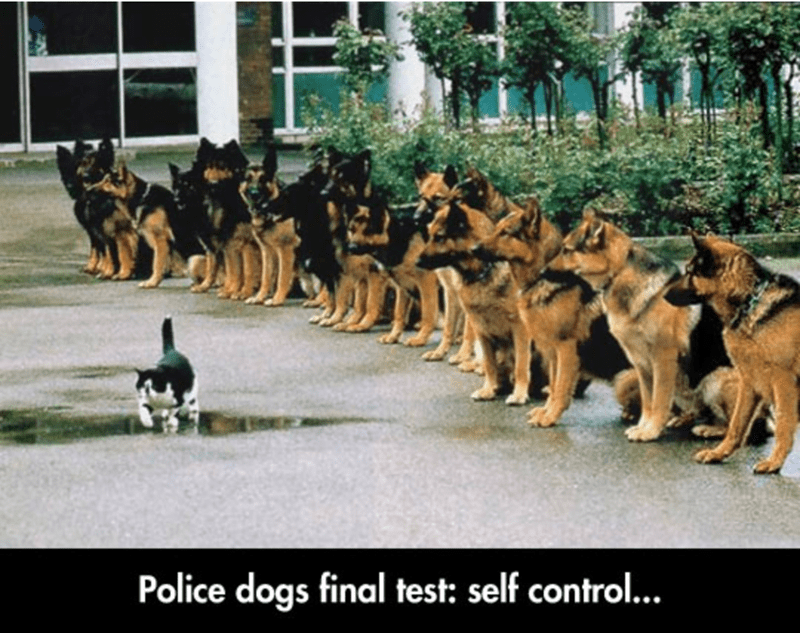 Funny German Shepherd Memes Picture Self Control