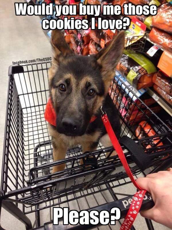Funny German Shepherd Memes Shopping Cart