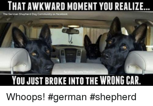 Funny German Shepherd Memes Picture Wrong Car