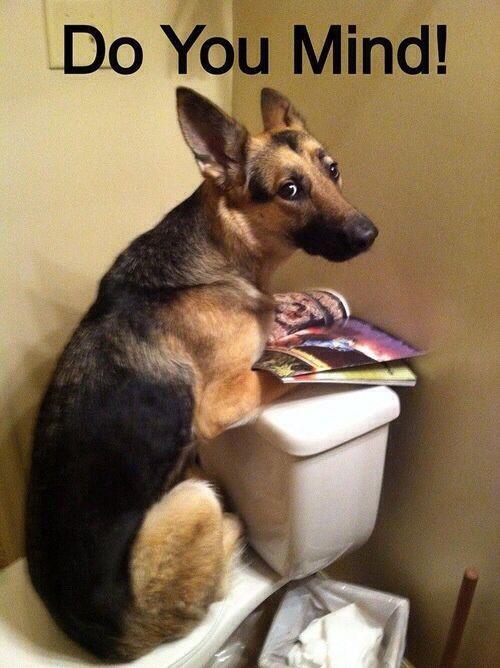 Funny German Shepherd Memes Pictures Toilet